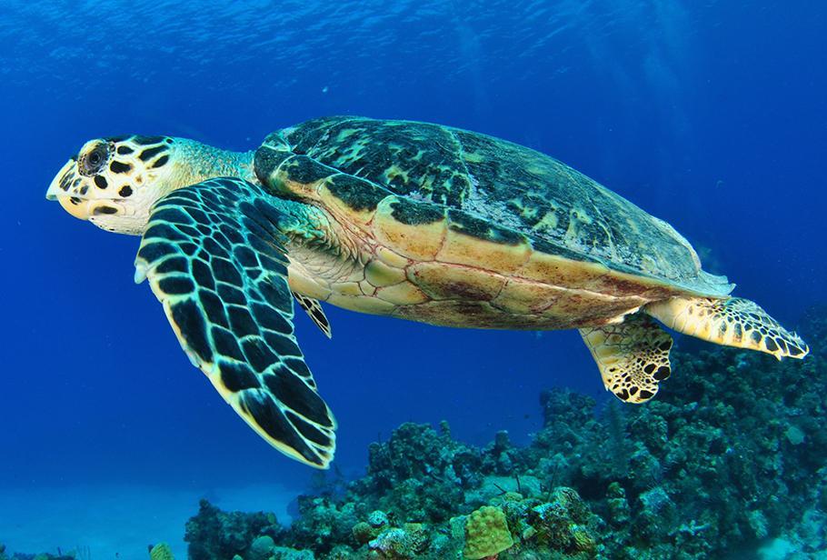 La vida de la tortuga marina